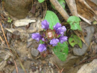 大菩薩の花4
