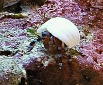 真っ白な貝殻が気に入った様子