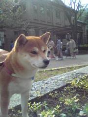 東京音楽学校奏学堂
