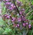 15日、堺からの出張帰りに登った伊吹山で。なんという花なんだろうか?