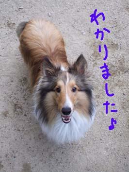 ohenji