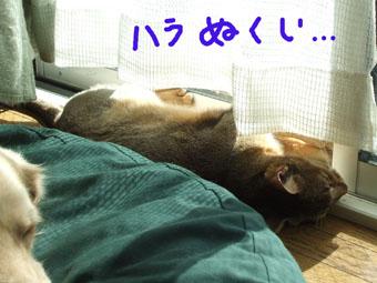 nikkouyoku