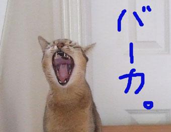 bakabaka