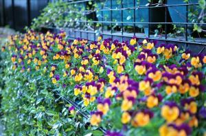 会社前の花
