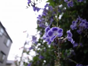 近所の花(ジオタグ付き)