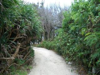 沖縄旅行 海岸に続く道