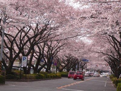 04・05桜まつり