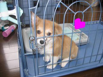 クキ造子犬