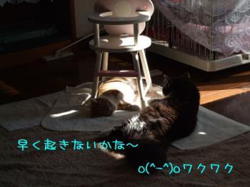 2008_02200022.jpg