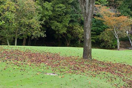 森林公園秋2-2