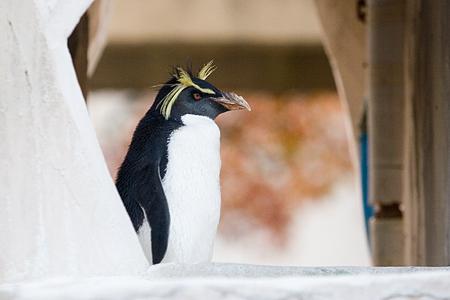 ペンギンストーリー11