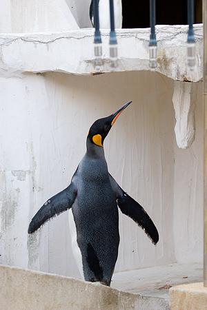 ペンギンストーリー4