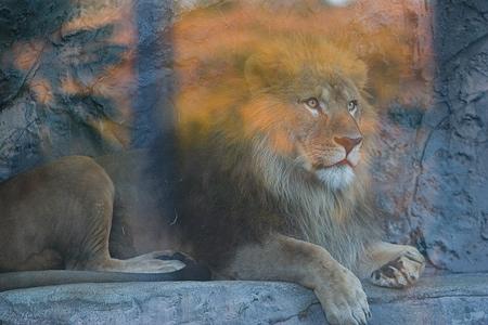 動物園の基本-1