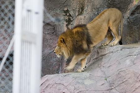 動物園の基本-3