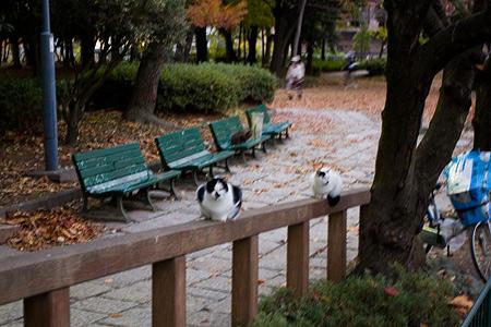 名城公園-3