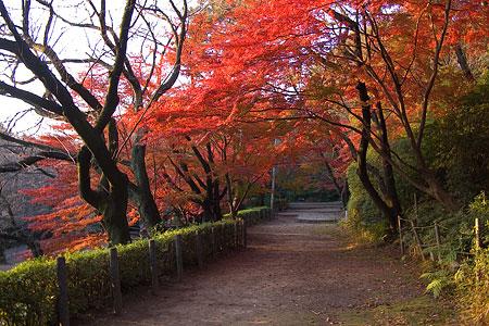 桜の馬場のモミジトンネル