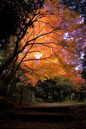 小牧山の紅葉