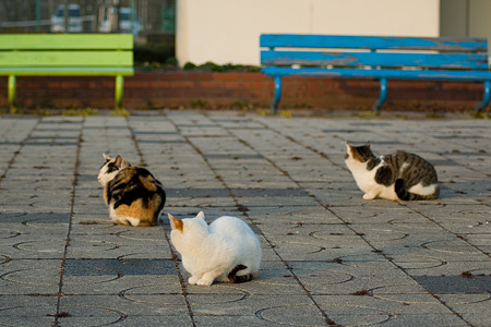 落合公園の猫-2