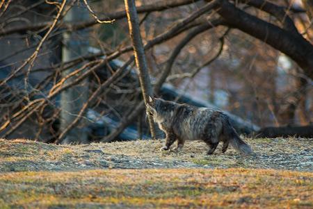 落合公園の猫-7