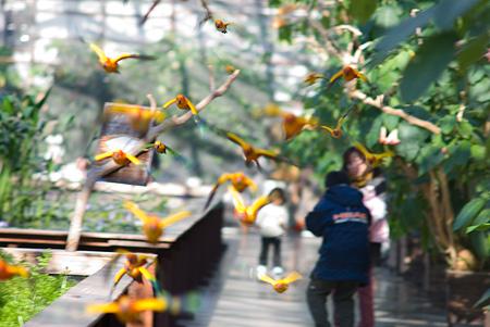 真冬の花鳥園1-2