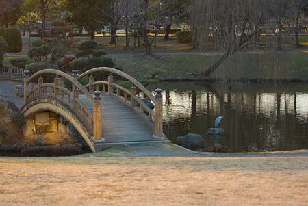 落合公園の鳥-1