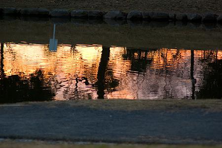 落合公園の鳥-12