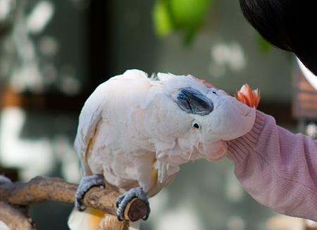 パラパラ的花鳥園-12