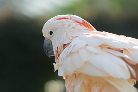 パラパラ的花鳥園-8