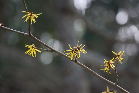 松平郷の花-10
