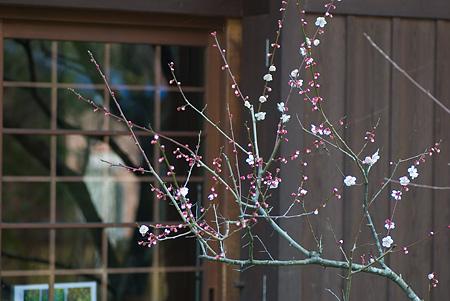 松平郷の花-9