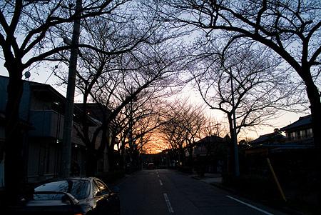 3月の近所写真-10