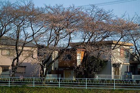 3月の近所写真-2