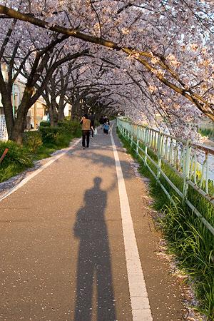 香流川桜1-1