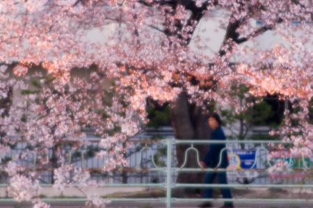 香流川桜1-10