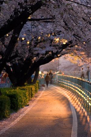 香流川桜1-14