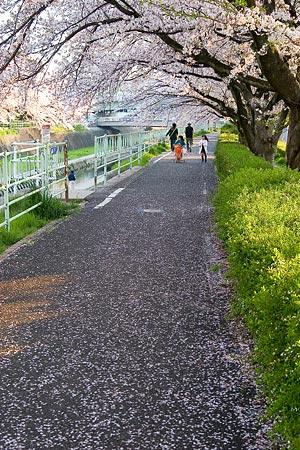 香流川桜1-2