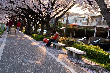 香流川桜1-4