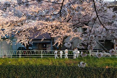 香流川桜1-5