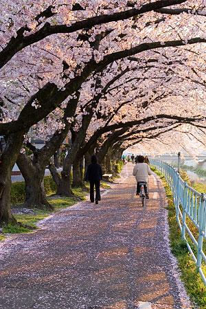 香流川桜1-7