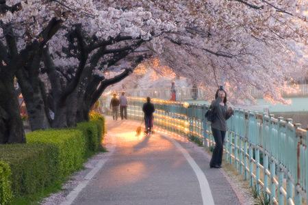 香流川桜1-8
