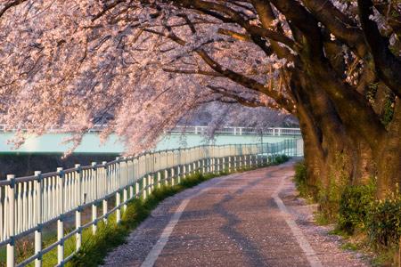 香流川桜2-10
