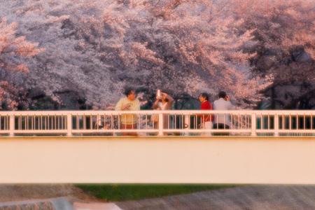 香流川桜2-11