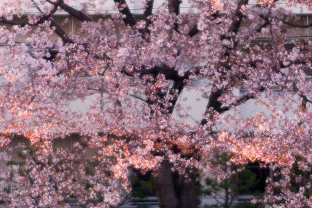 香流川桜2-13