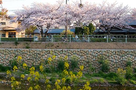 香流川桜2-7