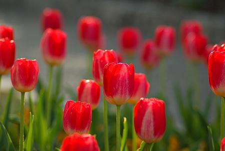モリコロ花-4