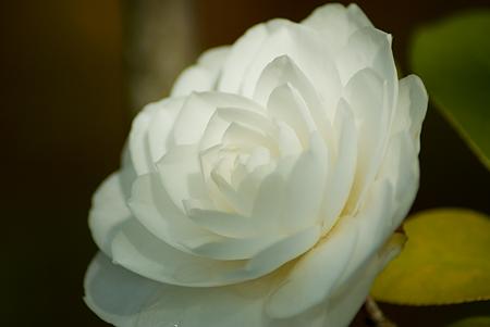 モリコロ花-6