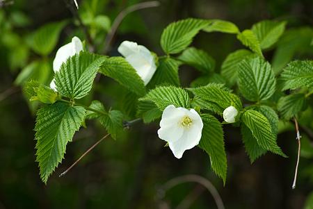 モリコロ花-8