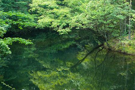 愛知県民の森1-3