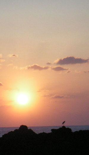 夕焼け鳥3