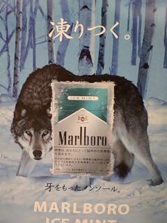 マルボロ狼
